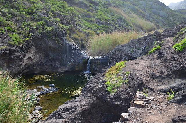 Rockpools in ravine near Afur, Tenerife