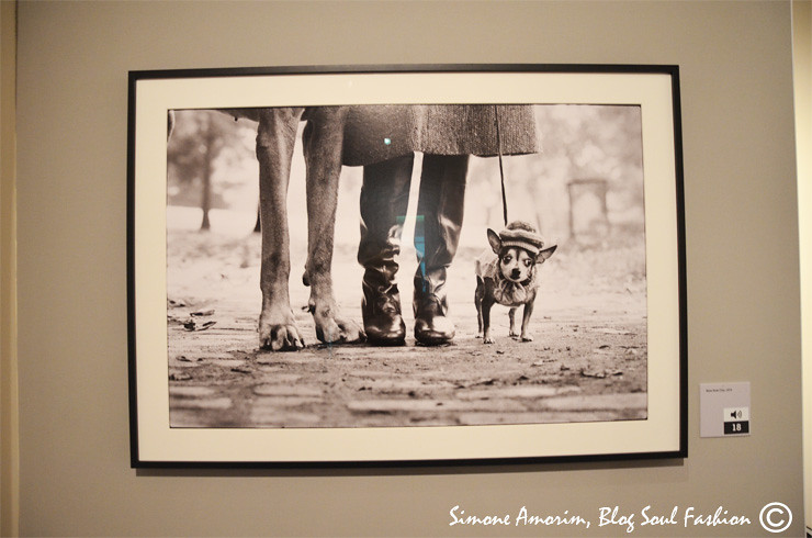 O Elliott adora cachorros e a eles dedicou 4 livros fotográficos