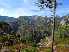 Bocca di Ricu : le haut du Finicione, le Castellucciu, Monte Calva, le ruisseau et la crête de Quarciteddu