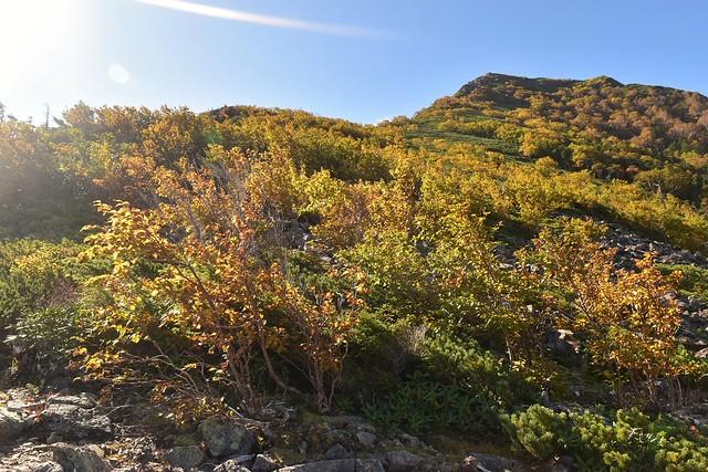 南アルプス栗沢山の紅葉
