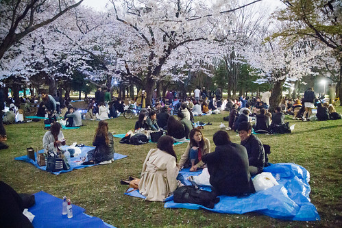 Hanami at Yoyogi Park 2017 | by Dick Thomas Johnson