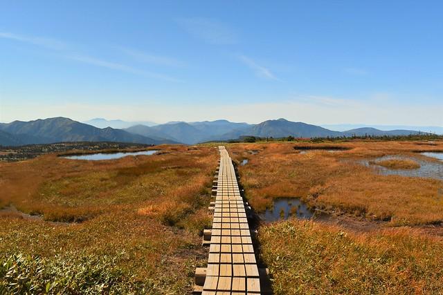苗場山山頂の1本の木道路