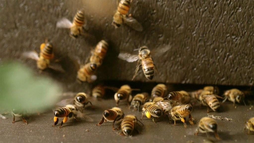 《蜂狂2》劇照2