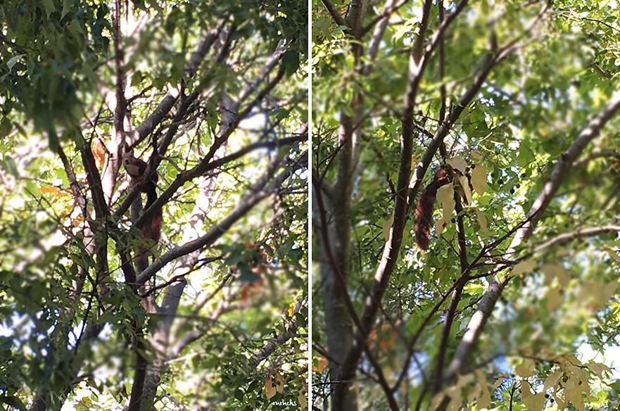 ardilla en un árbol Tuéjar