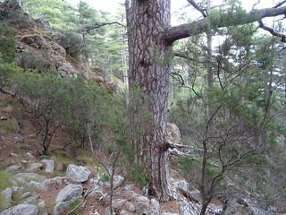 Dans la montée à Bocca di Castellucciu en versant Nord