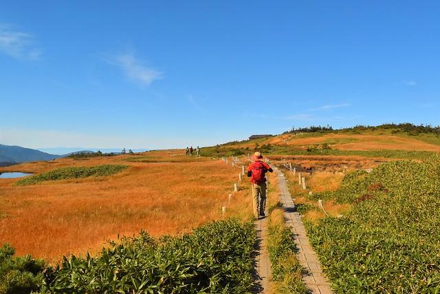 秋の苗場山登山 草紅葉と木道