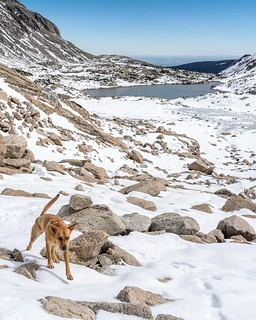 "It's snack time for #camillabarkerhowls. This girl is on leash, because #regulations, but that part was getting steep. Blue Lake in the background; watch for the cliff, the ""path"" is to the left, see previous pic. #BlueLake 