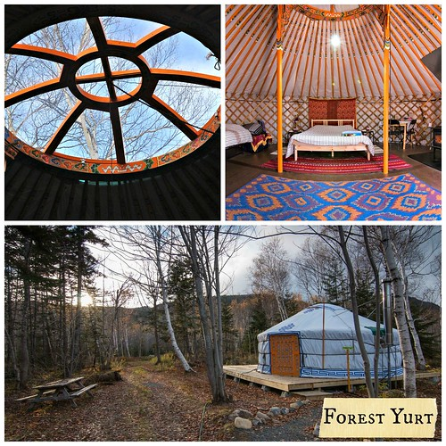 Inside and Outside the Forest Yurt