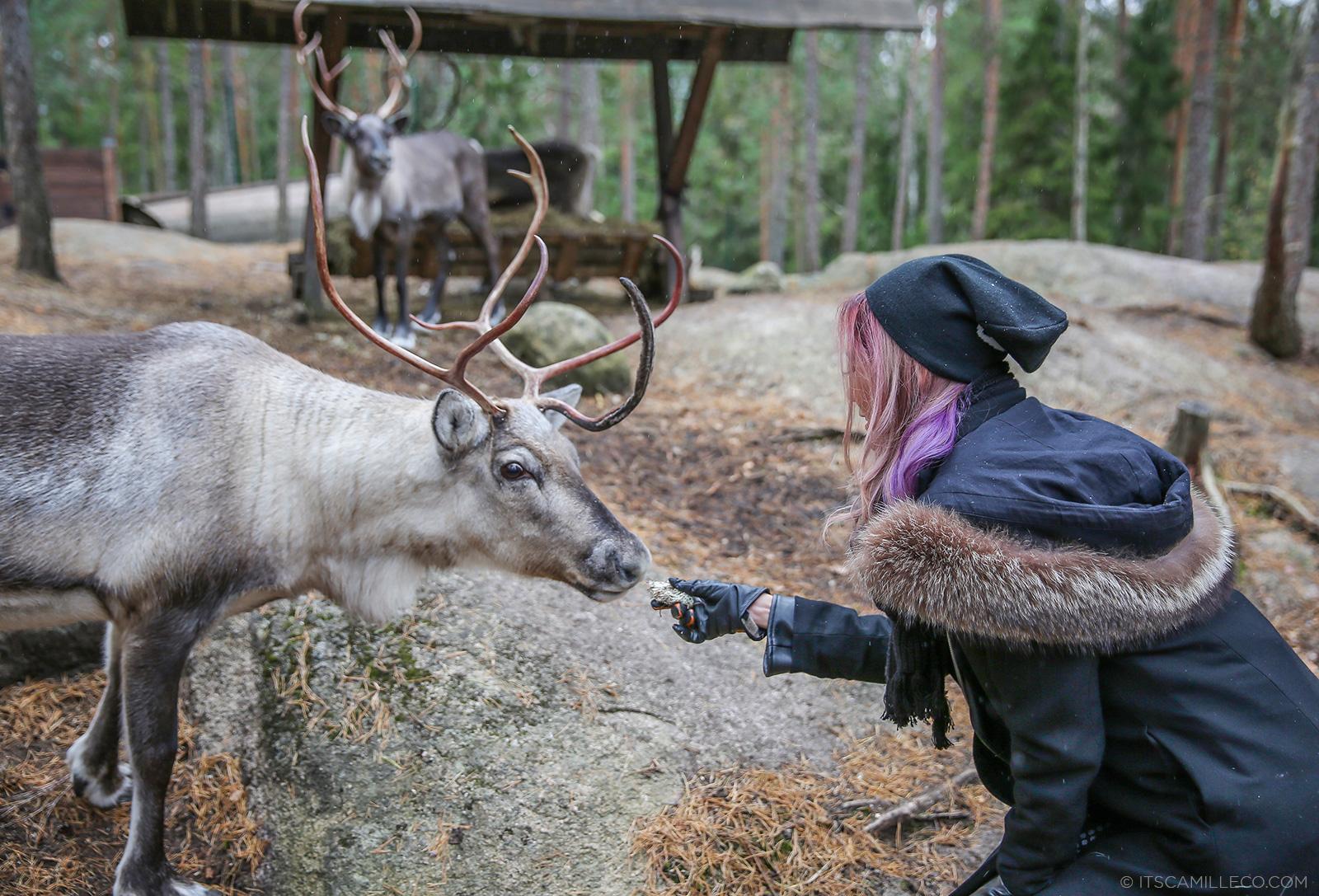 Reindeer Feeding in Finland - www.itscamilleco.com