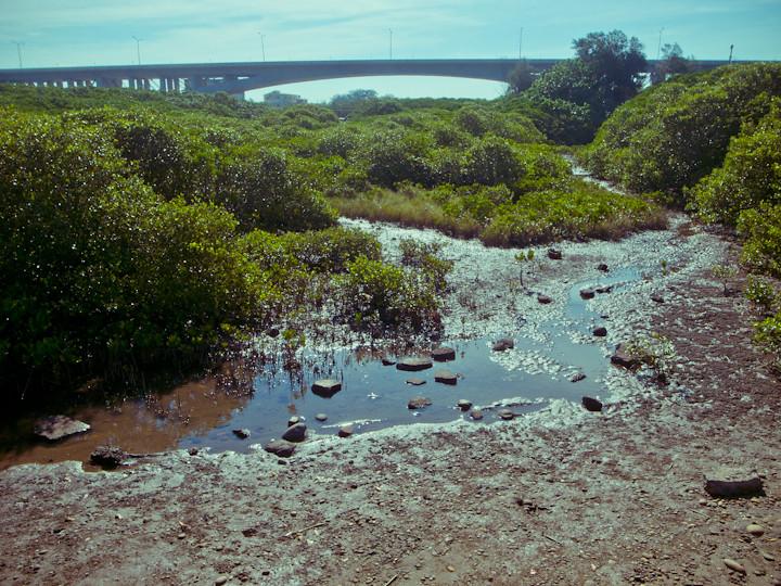 紅毛港紅樹林,磁片來源:manginwu (CC BY-SA 2.0)