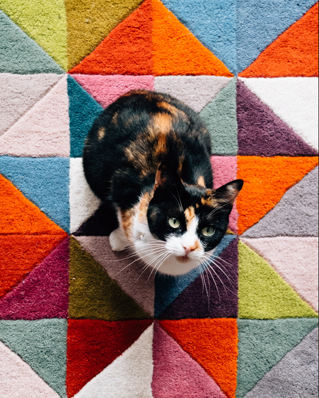 tortoiseshell cat on colourful rug