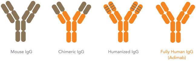 humanized antibody production   Humanization is important ...
