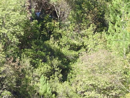 Vue du chemin vers la brèche avec des bénévoles en train de travailler : on imagine la végétation que traverse le chemin !