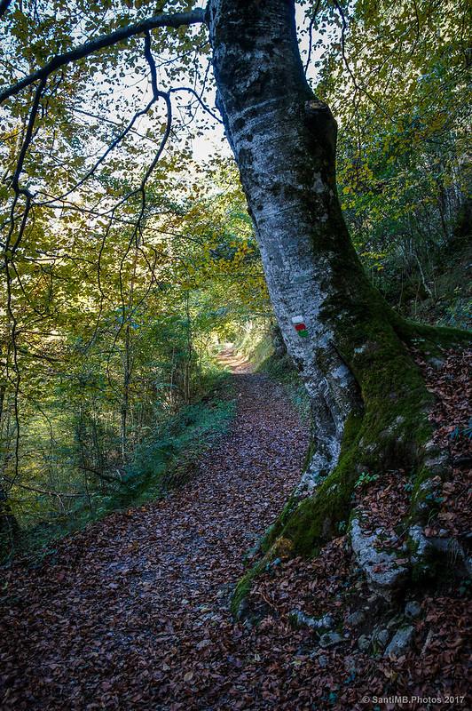 Camino del Lago Lareo