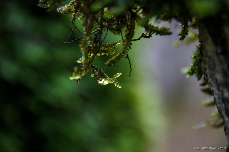 Musgo empapado en el Bosque Encantado de Urbasa