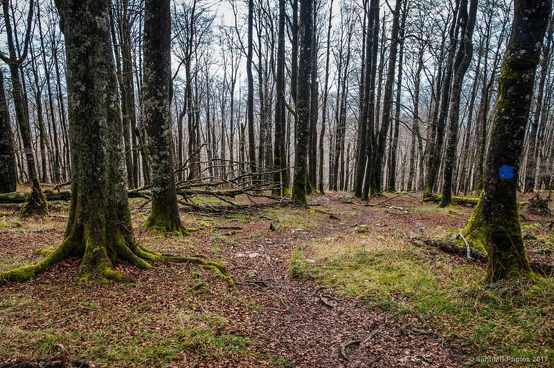 Bosque de Urbasa cerca del Paso de Altsau