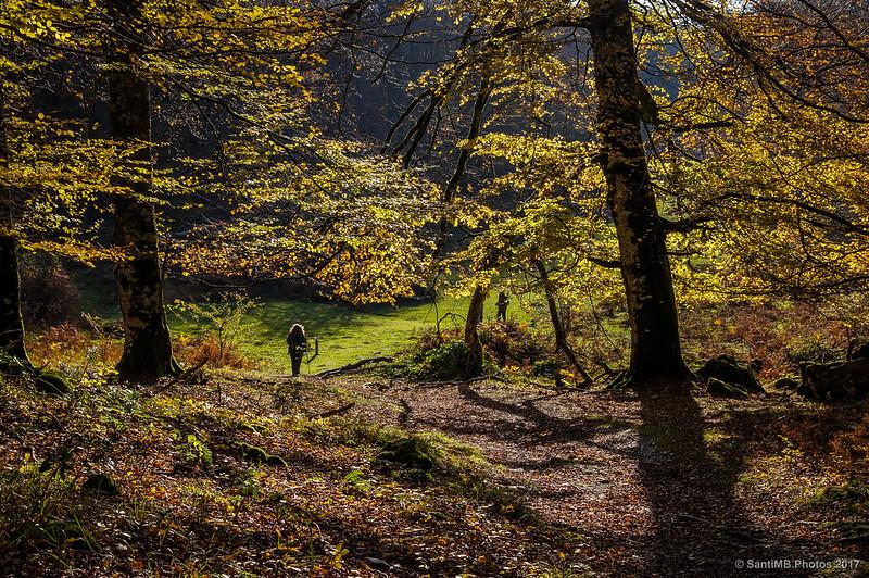 Llegando a un claro en un bosque de Urbasa