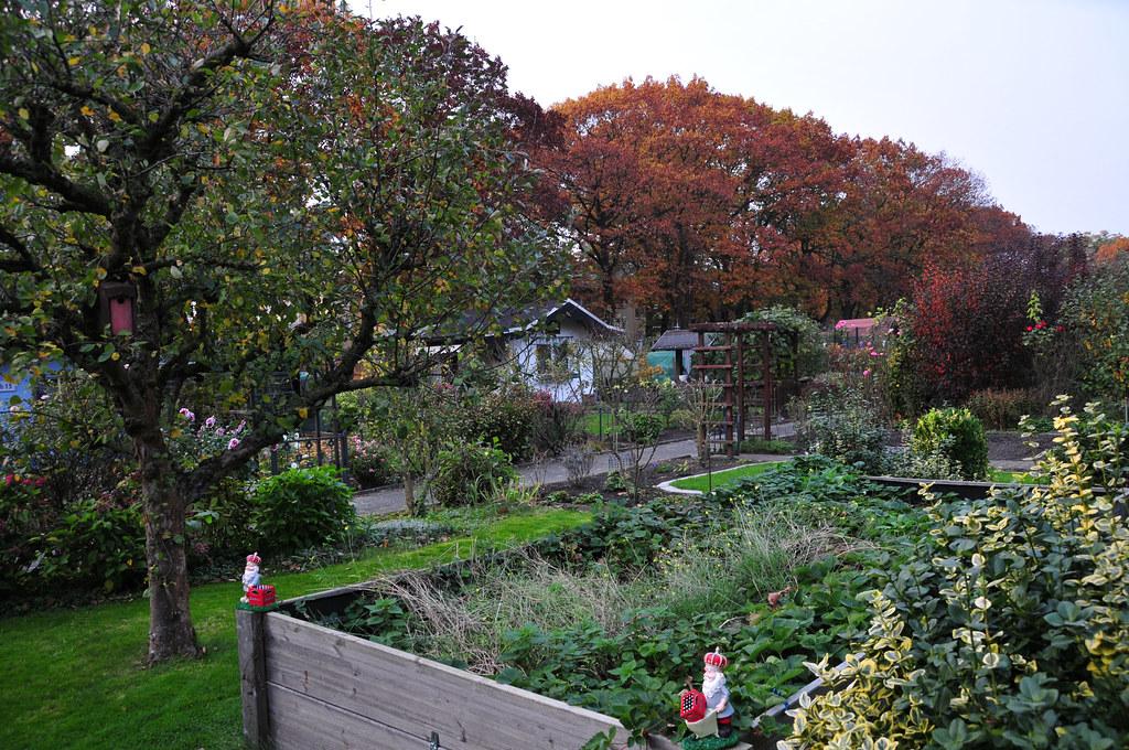 Der Garten Im Herbst Der Apfelbaum Verliert Seine Blatter Flickr
