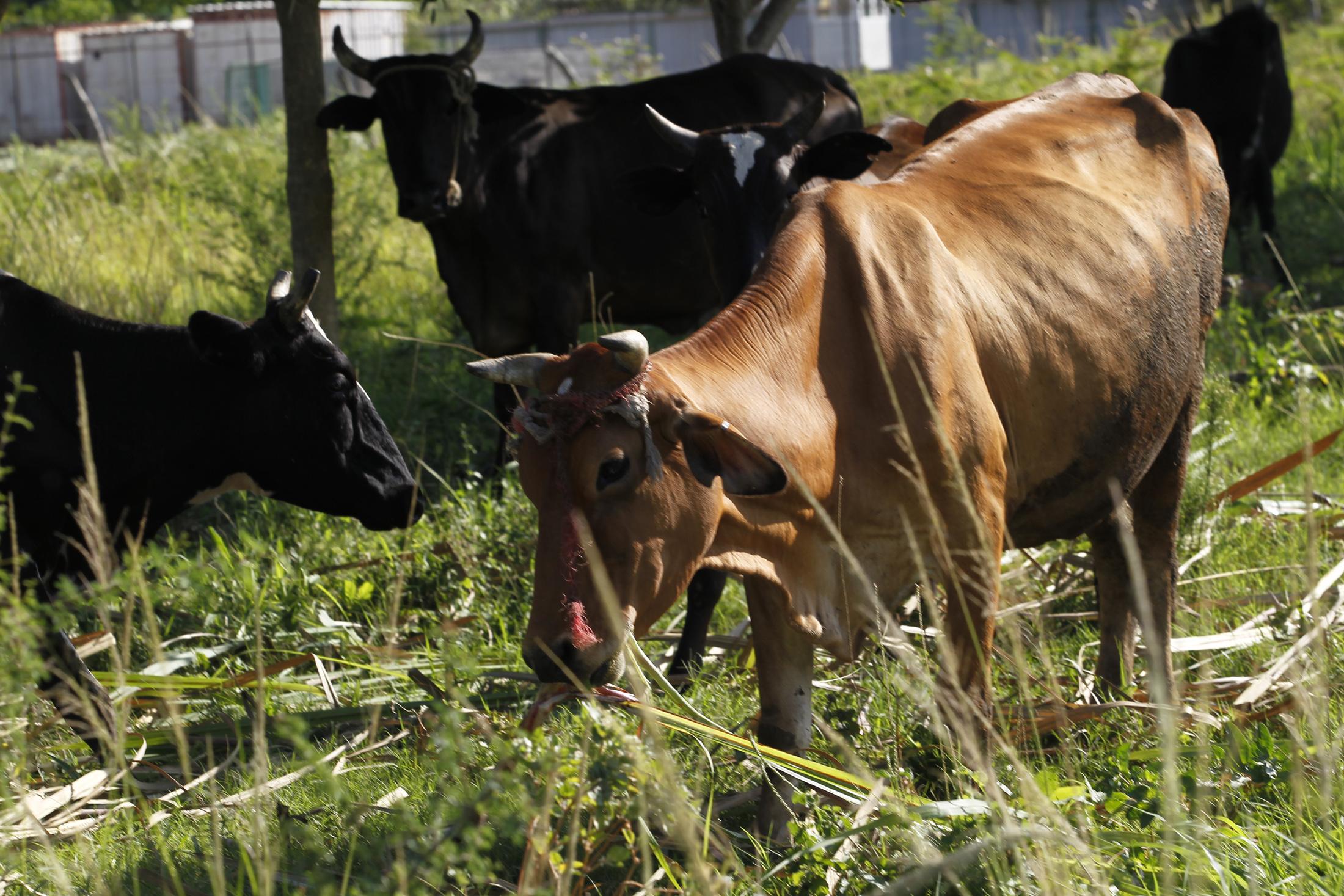 Una garantía para el alimento animal