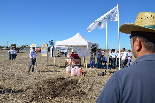 AionSur 24113450378_bd390c29b0_z_d La agricultura de conservación, en peligro por el retraso de la renovación del herbicida glisofato, según Asaja Agricultura