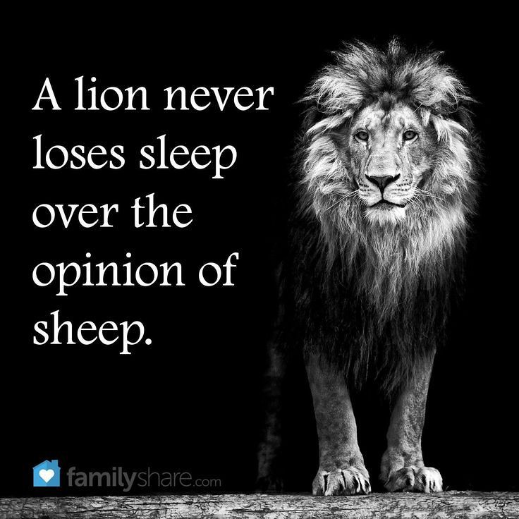Lion Sheep Quote: A Lion Never Loses Sleep Over The Opinions Of Sheep