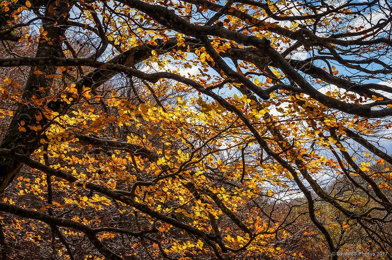 Colores de otoño en el Nacedero del Urederra