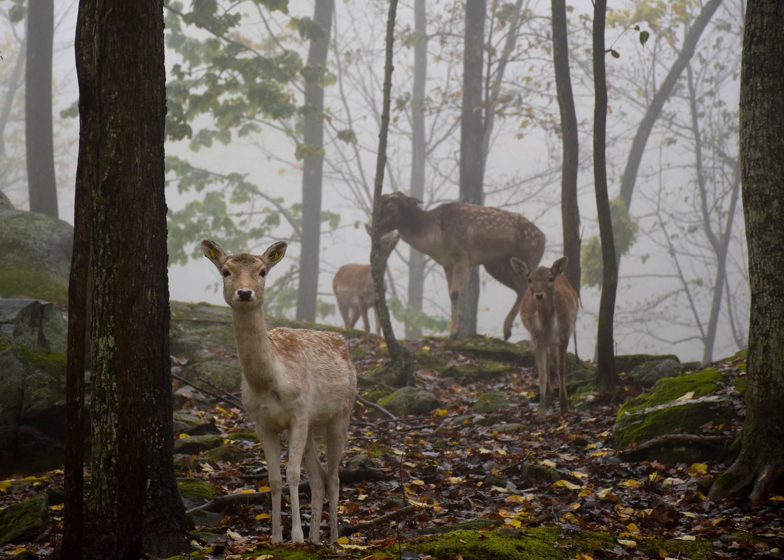 wildlife park in Canada