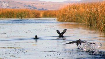 Kayak – Bird Watching