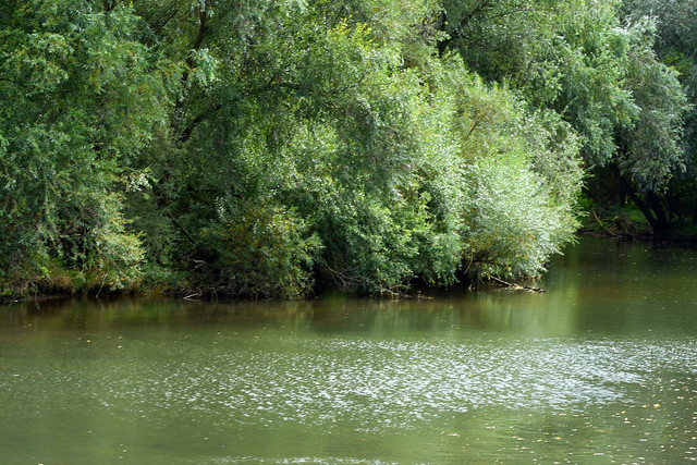 Der Arm des Altneckars bei Heidelberg-Wieblingen ... Teil des Natur- und Landschaftsschutzgebietes Unterer Neckar