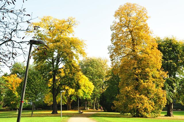 Der Untere Luisenpark in Mannheim ... Herbstfarben ... alter Baumbestand ... Oktober 2017 ... Foto: Brigitte Stolle