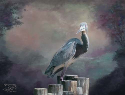 Image of a digitally painted Tri-colored Heron