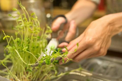 綠藤生機以芽菜創業起家。