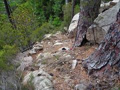 Dans la descente de Bocca di Ricu en versant SW