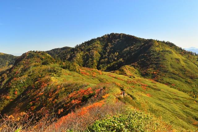 10月の苗場山 稜線の紅葉風景