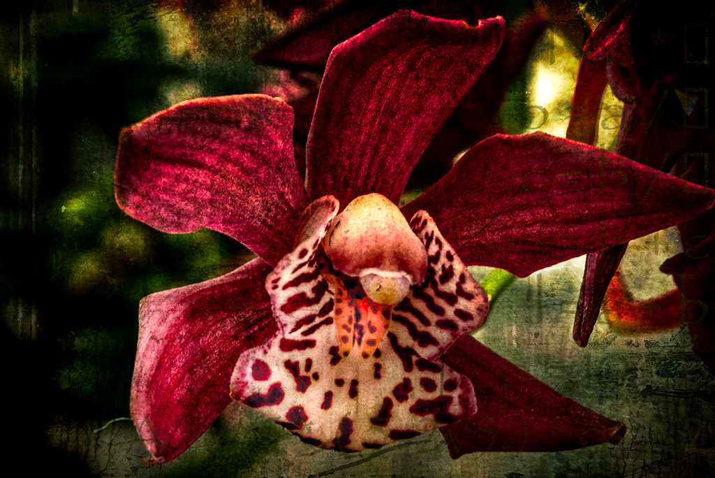 Orchidelirium: Starfish - abstract orchid, Denver CO