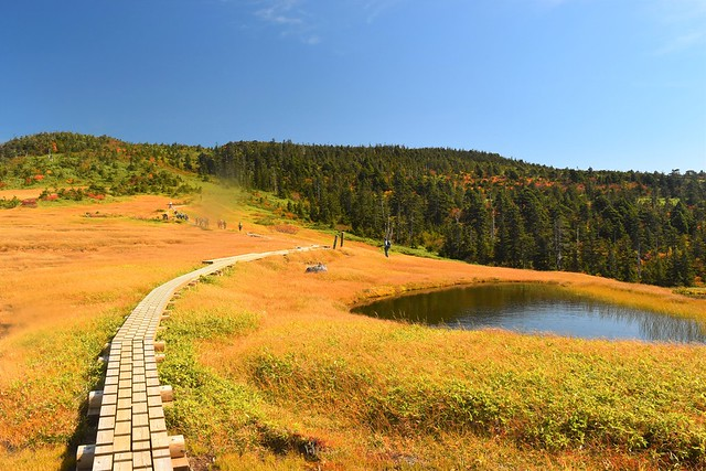 苗場山・小赤沢コースの高層湿原