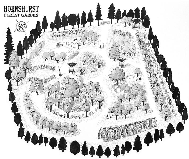 Hornhurst Forest Garden design