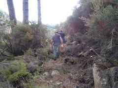Démaquisage dans la remontée du chemin vers le pied du versant NE du Castedducciu