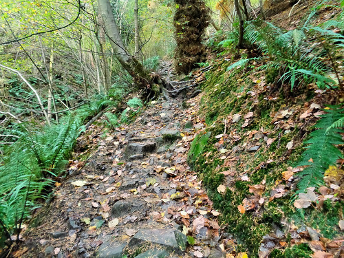 Ascending Parkin Clough