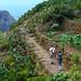 Narrow path, Anaga, Tenerife