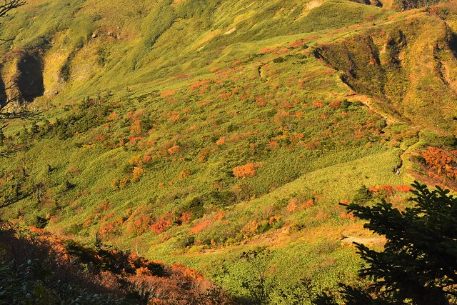 苗場山 稜線の紅葉