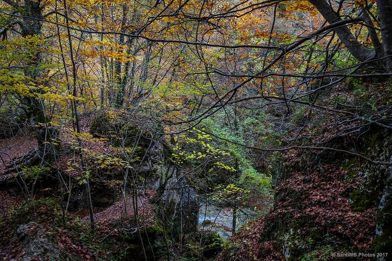 Espesa vegetación en torno al río Urederra