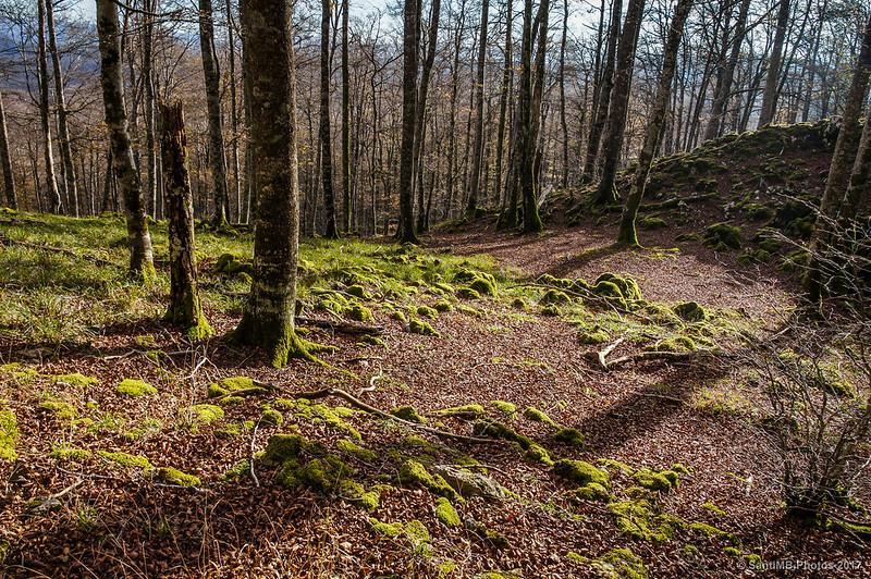 Tomando otro sendero en el Bosque Encantado de Urbasa