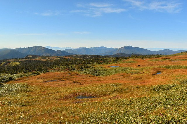 秋の苗場山 山頂湿原の草紅葉