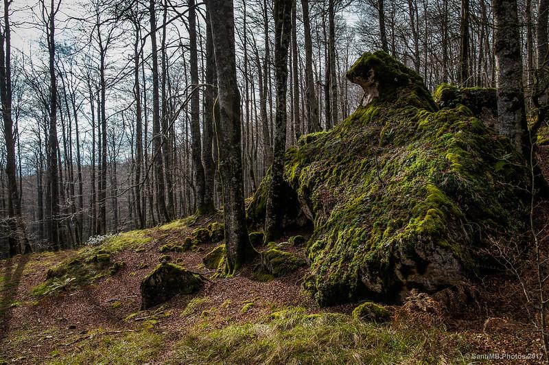 La Cabeza de Oso del Bosque Encantado de Urbasa