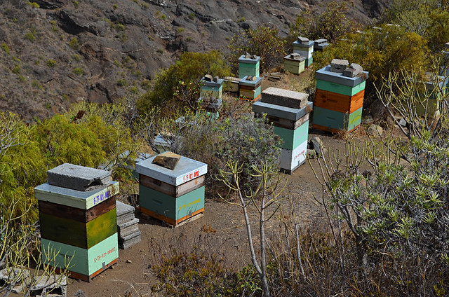 Beehives, La Gomera, Canary Islands