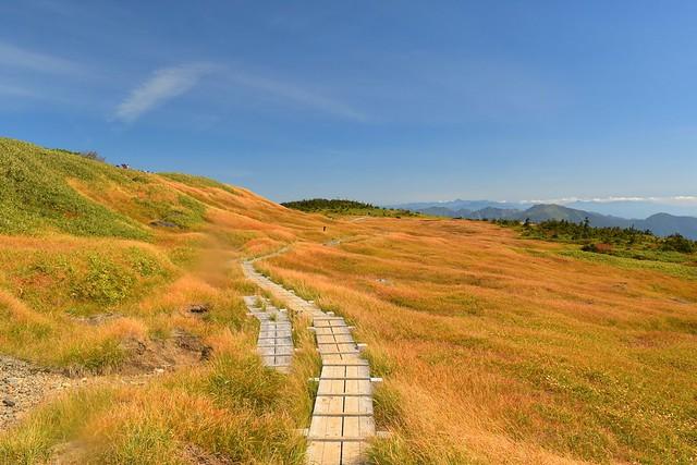 苗場山 山頂の草紅葉風景