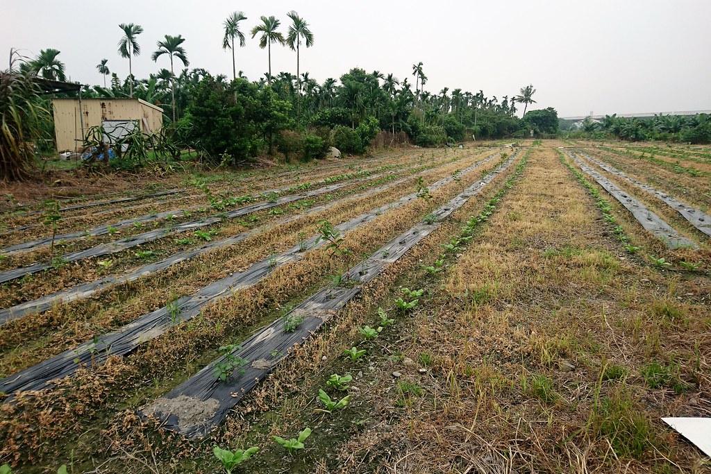 除草劑為農藥,目前無非農用土地使用規範,因此非農土地大量使用除草劑,造成民眾生活和健康危害。攝影:李育琴。