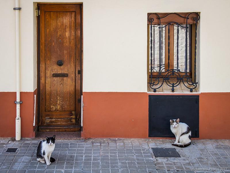 Gatos en la calle Granollers en el barrio de Horta