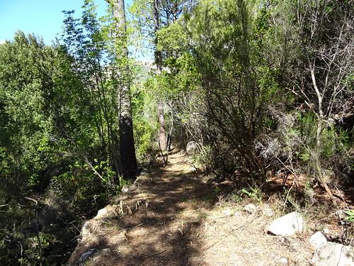 Le Chemin d'exploitation du Carciara en RG de la Figa Bona : vues du chemin après les travaux avec ses magnifiques soutènements